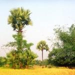 Tree-Leat